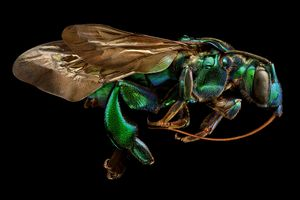Microsculpture: The Insect Portraits of Levon Biss